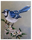 Blue Jay & Apple Blossoms - 8x10 - ap.JPG