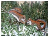 Two_Red_Squirrels.JPG