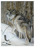 female brush wolf - 16x20.jpg